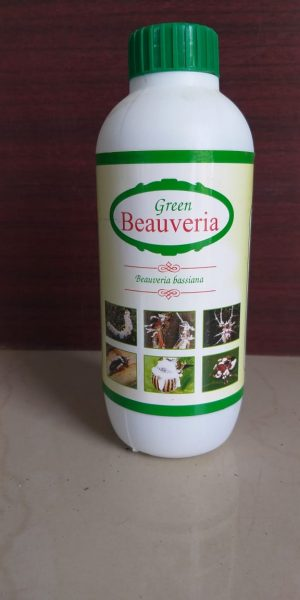 green beauvria